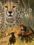 Wild Iran - A documentary film about wild life in Iran (DVD)